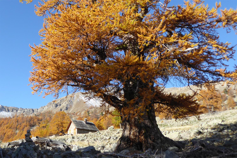 efterårsfarver i Mercantour